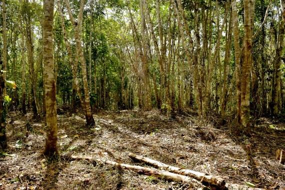 Terreno Dhamma Bhassara